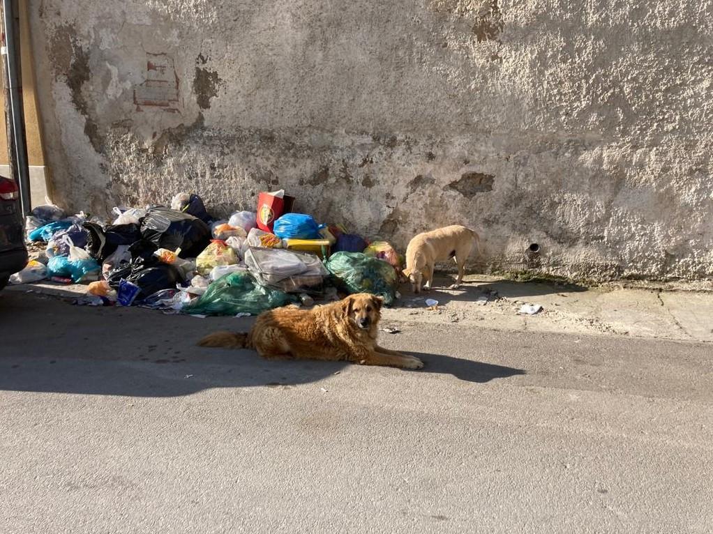 """Immagine articolo: Il lettore scrive: """"Ancora rifiuti abbandonati per le vie della città"""""""