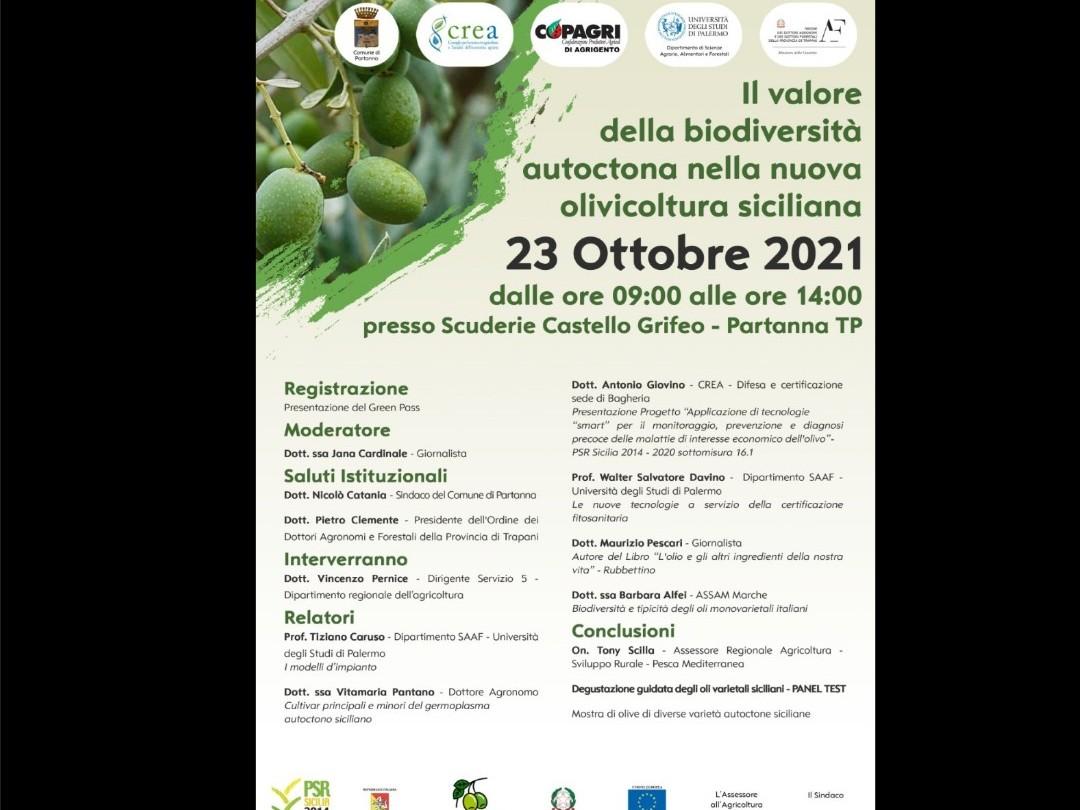 """Immagine articolo: """"Il valore della biodiversità autoctona nella nuova olivicoltura siciliana"""". Sabato 23 ottobre il convegno a Partanna"""