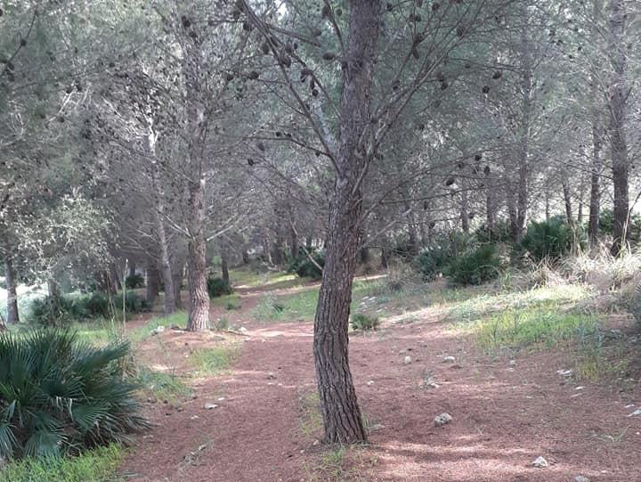 Immagine articolo: Il bosco del Frassino a CVetrano e la sua incantevole posizione tra natura e storia