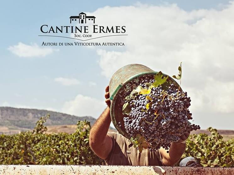 """Immagine articolo: Santa Ninfa: oltre 60 Milioni di fatturato per il gruppo """"Ermes"""", azienda vinicola in continua crescita"""