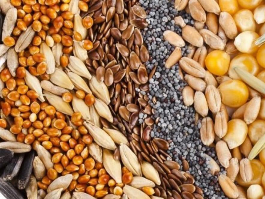 Immagine articolo: I semi tra proprietà nutritive e benefici per la nostra salute. Ecco quali sono e perchè fanno bene