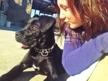 Immagine articolo: Le avvelenano tre cani e apre pagina Facebook per scoprire verità. Stefania Petralia racconta la sua storia