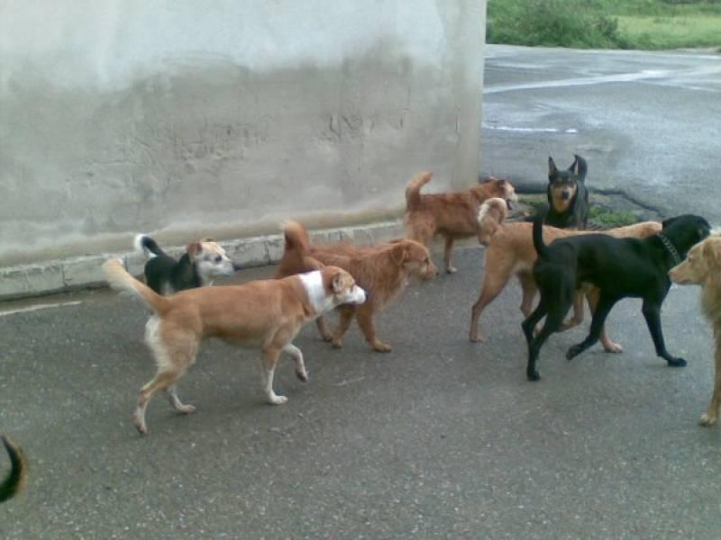 """Immagine articolo: """"Un rifugio per gli animali randagi a Campobello nel bene confiscato di Contrada Tonciolo"""". Mozione di alcuni Consiglieri dell'Opposizione"""