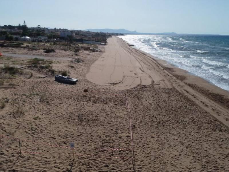 Immagine articolo: Triscina, scoperti nuovi nidi di fratini lungo la spiaggia. Aree messe in sicurezza dagli operai Sager-Ecoburgus